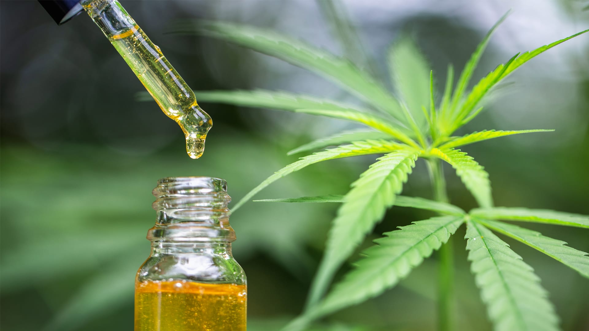 Things to consider when you buy CBD Online post thumbnail image
